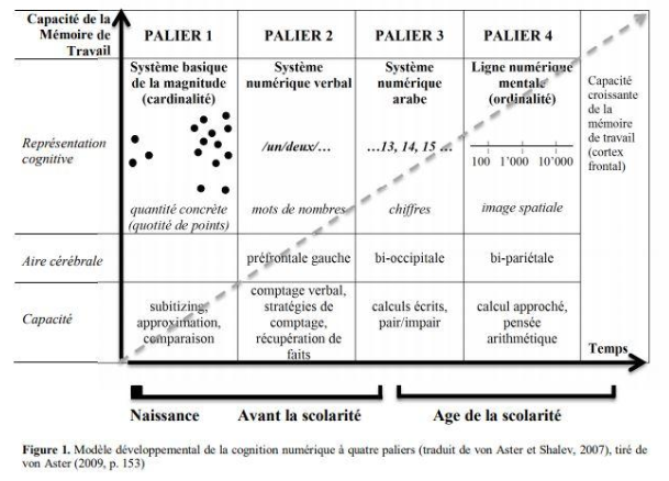 developpement de la cognition mathématique - article blog